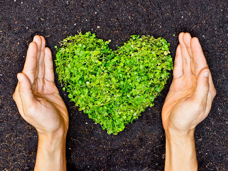 hands holding green heart shaped tree / tree arranged in a heart shape / love nature / save the world / heal the world / environmental preservation